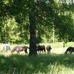 Sommarhagen 2011
