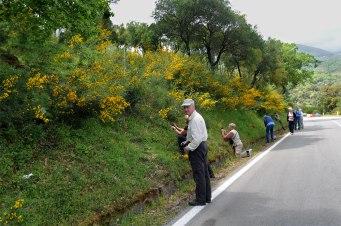 Orkidérik vägbank på norra Sicilien
