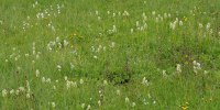Dactylorhiza_ochroleuca_3