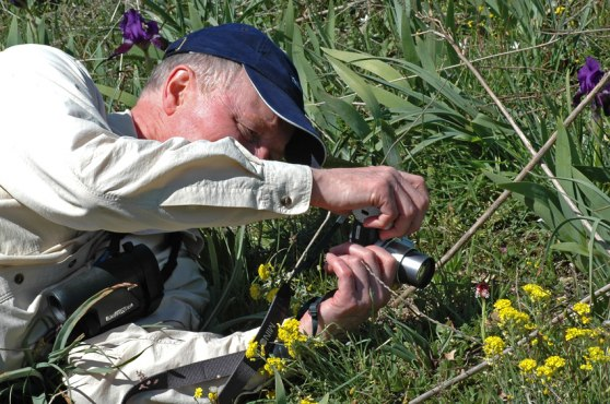 Förevigande av N. ustulata, Gargano 2005-04-23