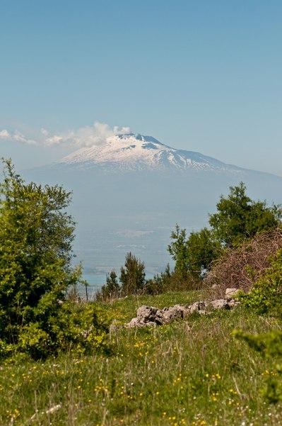 Miljö för O. subfusca subsp. archimedea med Etna i bakgrunden.