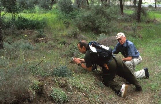 O. israelitica-lokal, Cypern, 2002-03-13