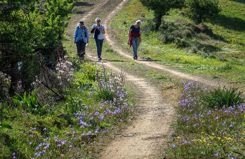 Traktorvägen uppför kullen var kantad av den blå irisliknande Moraea sisyrinchium.