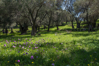 The olive grove, with its greenery and orchids, gave a paradise impression