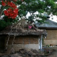 changing roof at the moyo mmoja guesthouse