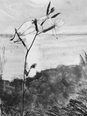 Ensom blomst i El Campello, blyanttegning