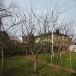 äppelträdsbeskärning1