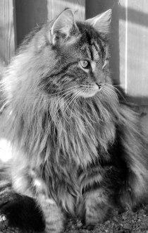 Det här är mattes mysiga och fina Vincent. Han är en riktig goskille som är född den 1 mars år 2004.