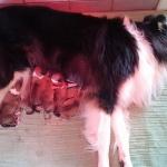 Valparna födda 31/5-2015