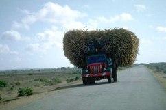 Tunga Transporter