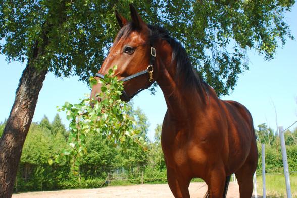 Hoas hästar laddar med naturliga råvaror...