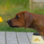 12 weeks Stella head profil
