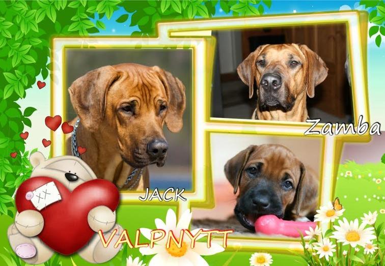 13 april 9 pups was born
