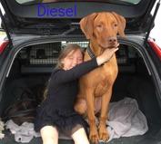 1 y o Diesel