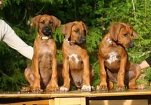 3 pups 3 months 2