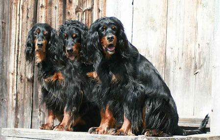 Tre generationer fr.v Hedda, Ditzie & U-Hell