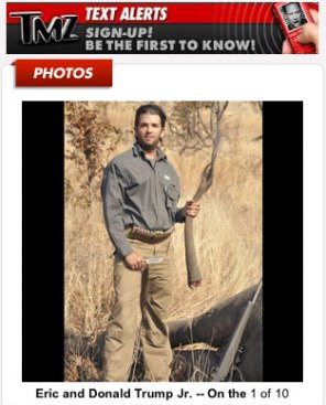 Apparently Donald Trumps sons find it amusing to kill exotic animals in Africa… Here one of them holds up the tail of the newly killed elephant.