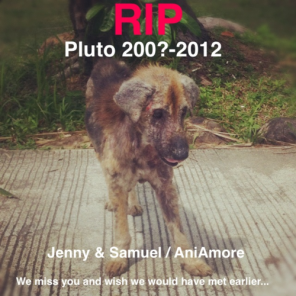 I am sorry to report that our little friend Pluto had to be euthanized. He was in to bad condition, it was too late...