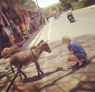 A small donkey in India, so cute. But they overloaded it with work, I told them to be more friendly with it.