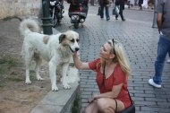 The stray dogs of Istanbul are wonderful! Don't hesitate to give them some love...