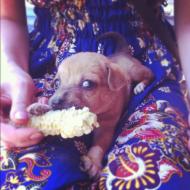 Feeding a little puppy in Laos.