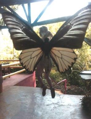 Jenny Hutton beautiful butterfly