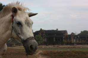 Near by Angkor Wat, Cambodia, I saw a horse that looked miserable. The chains around his head had started to cut in to his skin and bone. I set off to find some textile to put around the chains, as padding to ease the pain.