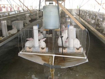 An example of a rabbit farm, this one in Australia.