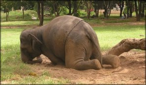 Do not give money to those who profit from elephants in  captivity! These animals are the modern slaves.