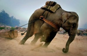 Animals -the slaves of ,odern time.