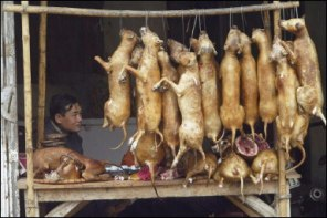 China is commonly know around the world for eating dog meat. This is not a lie.