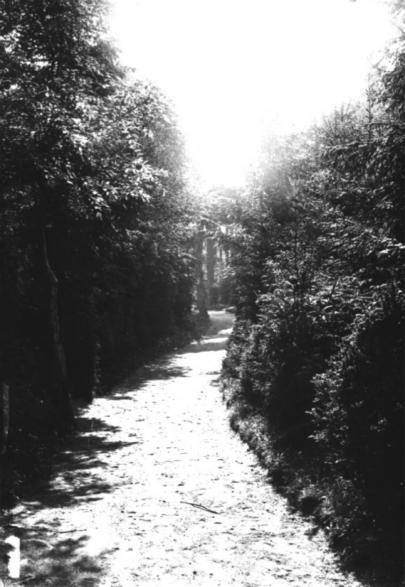 Efter att ha varit nedgången som park rustades Boulogner med välansade och uppgrusade gångar runt om i den täta vegetationen som fanns här och där. (Skövde Stadsmuseum)