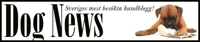 """DOG NEWS - Sveriges största """"renodlade"""" hundblogg, med upp till 210 000 besökare i månaden! Hundnyheter 7 dagar i veckan från när och fjärran. Vi skriver om det mesta som rör hund."""
