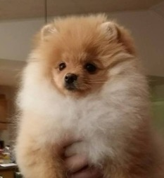 Chloé 4,5 months