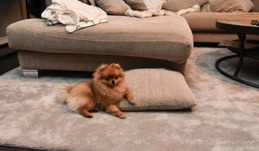 Lucy chillar hemma i soffan