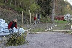 Ny vingård tar form 2012.