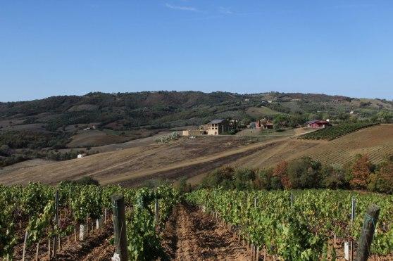 Vingården Pianirosso  -  vår bas i Toscana.