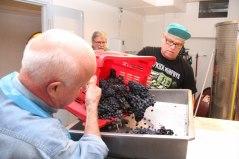 Druvorna omhändertas på Högberga Vinfabrik.