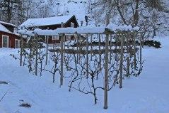 Nedre vingården 9 december.