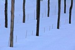 Övre vingården dold av snö. 9 december.