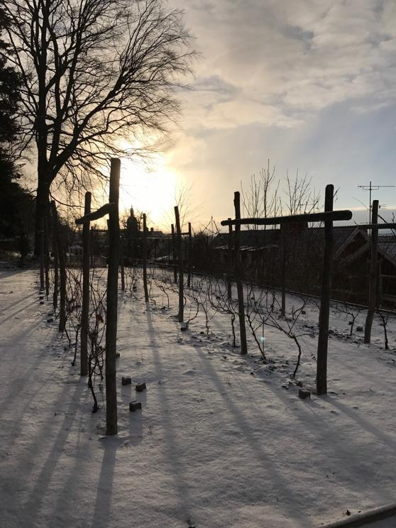 Övre vingården i Gränna 2017-02-07