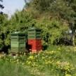 Andelsbiodling - BeeGees