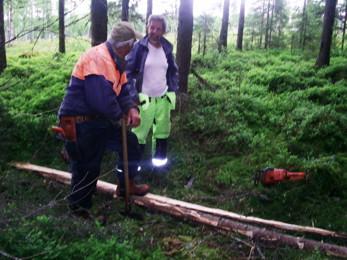 Enar Gustafsson och Swen lägger ut spänger av granstammar, som Enar kluvit, på en sumpig del av leden.