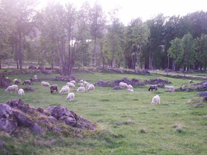Får, gamla odlingsrösen, stengärsgårdar och hävdvunna växter, bland annat, kommer att möta den som går leden i Hån Naturreservat.