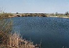 Dammen nyttjas för bevattning