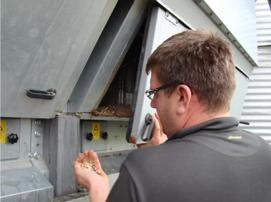 Inspektion av torkning av 2012 års åkerbönor, som hade en hög vattenhalt.