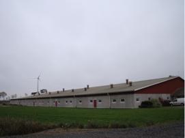 Var fjärde vecka tas 110 dräktiga suggor emot för grisning på Badene