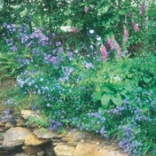 ​Wildflower Woodland Mixture