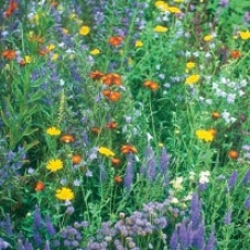​Wildflower Wildlife Mixture