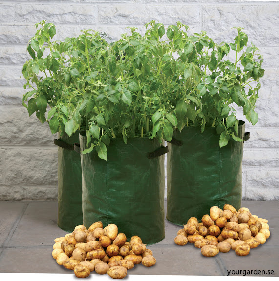 3 Potato Planter high resolution